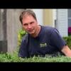 Neues aus dem Klostergarten: Buchsbaumschädlinge vernichten