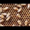 Bienen Versorgung Brut