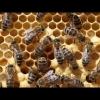 Bienen Versorgung Brut 2