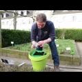 Benissimo: Kräutergartentipp Kamille aussäen